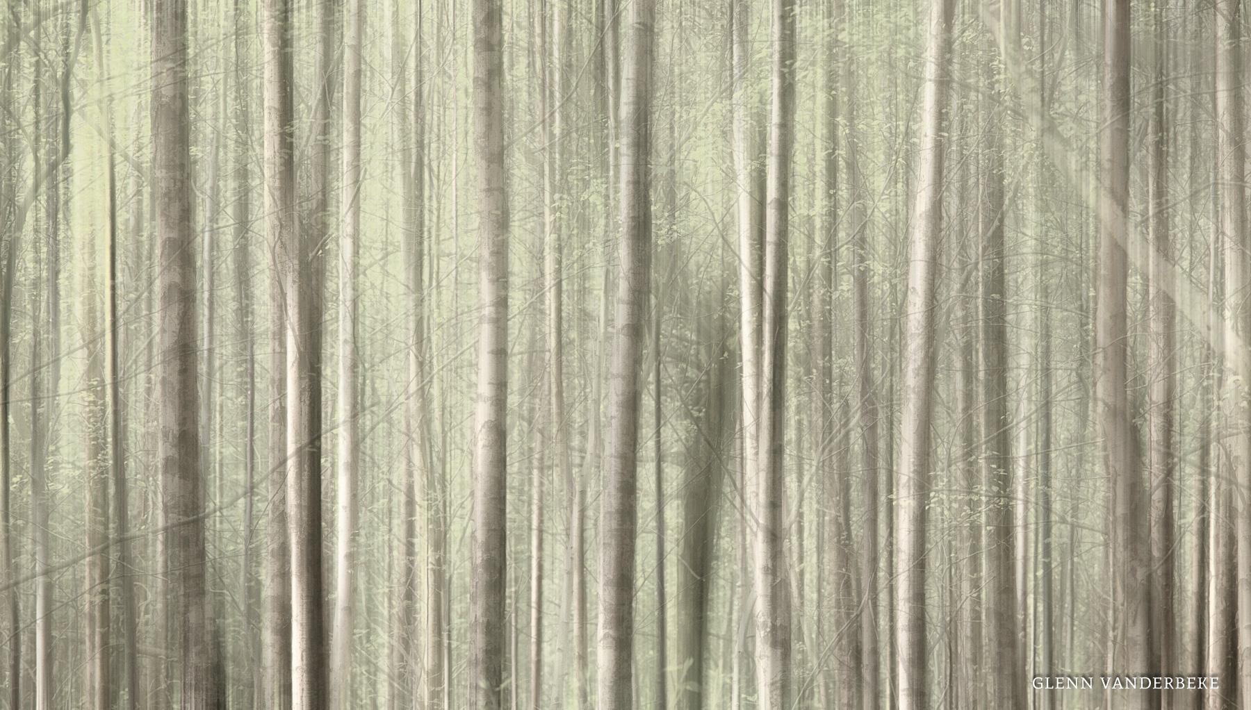 glenn vanderbeke, glenn vanderbeke fotografie, glenn vanderbeke belgisch landschapsfotograaf, landschapsfotograaf, landschapsfotografie glenn vanderbeke, landscape photographer glenn vanderbeke, fine art photographer Glenn Vanderbeke, Belgische landschapsfotograaf, landschapsfotografie west-vlaanderen, west vlaamse landschapsfotograaf, België, Torhout, Bos kasteel d'Aertrycke