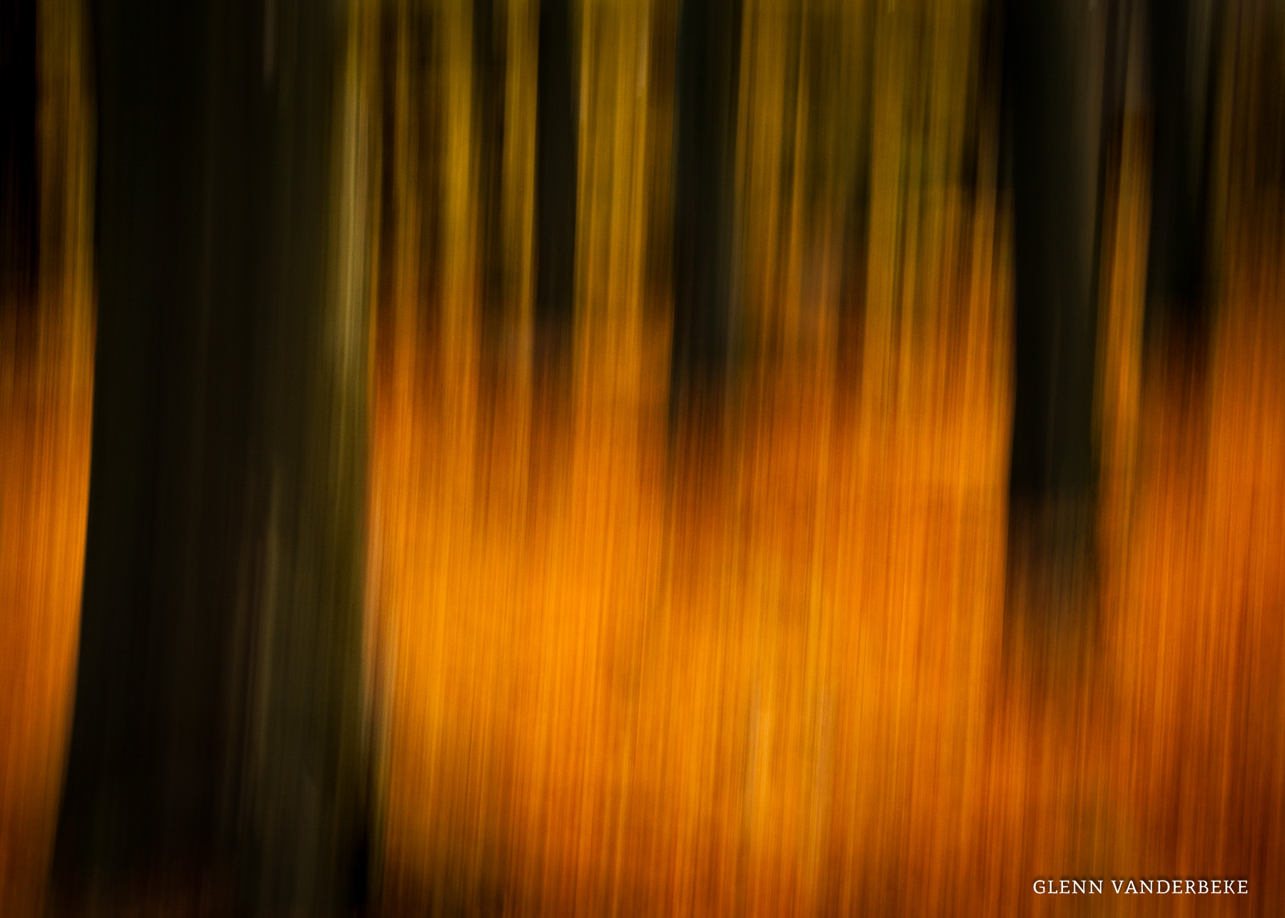 glenn vanderbeke, glenn vanderbeke fotografie, glenn vanderbeke belgisch landschapsfotograaf, landschapsfotograaf, landschapsfotografie glenn vanderbeke, landscape photographer glenn vanderbeke, fine art photographer Glenn Vanderbeke, Belgische landschapsfotograaf, landschapsfotografie west-vlaanderen, west vlaamse landschapsfotograaf, België, Drongengoedbos, Ursel