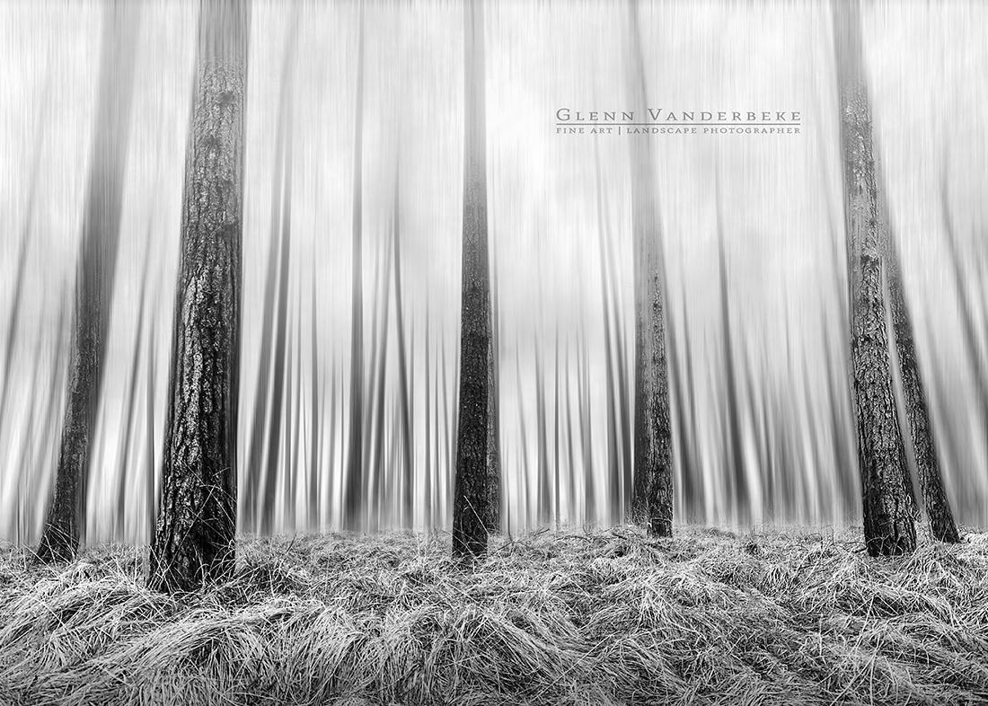 Dennenbos, Kalmthoutse Heide © West-Vlaamse landschapsfotograaf Glenn Vanderbeke