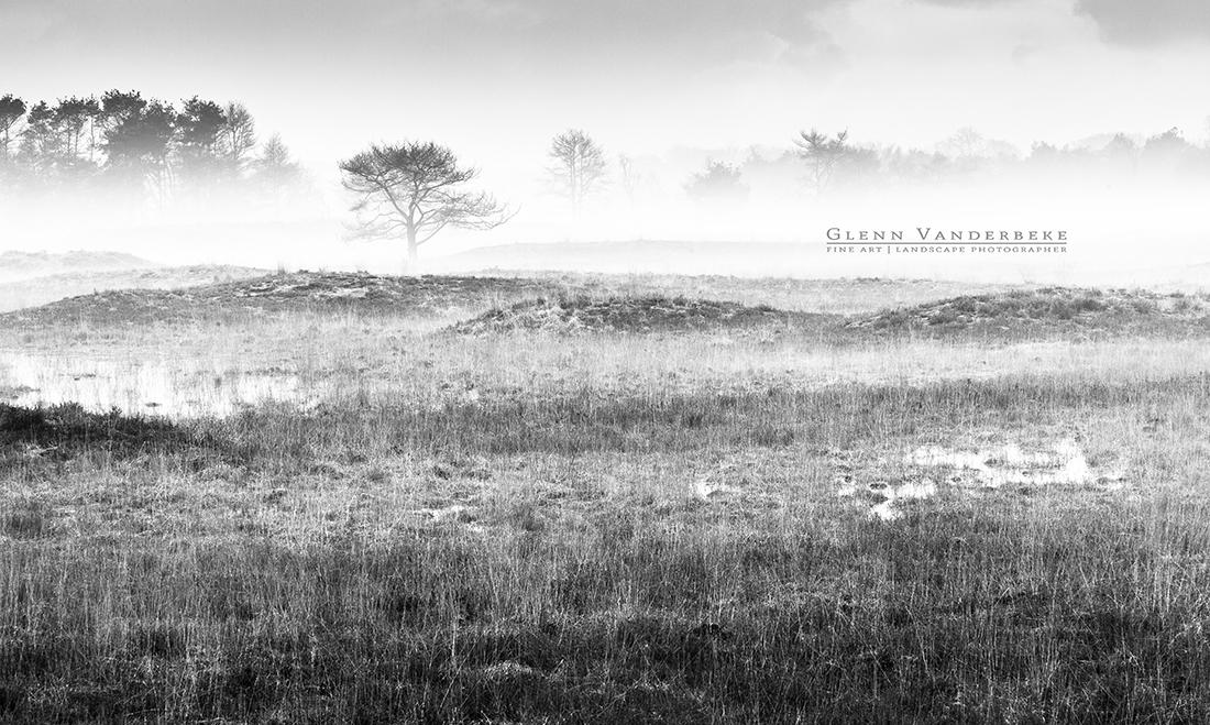 Heidelandschap, Kalmthoutse Heide © West-Vlaamse landschapsfotograaf Glenn Vanderbeke