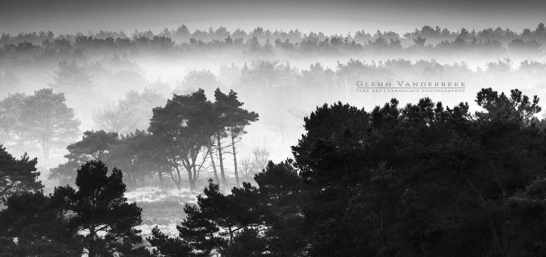 Zicht vanuit de brandtoren, Kalmthoutse Heide © West-Vlaamse landschapsfotograaf Glenn Vanderbeke
