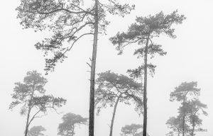 glenn vanderbeke, glenn vanderbeke fotografie, glenn vanderbeke belgisch landschapsfotograaf, landschapsfotograaf, landschapsfotografie glenn vanderbeke, landscape photographer glenn vanderbeke, fine art photographer Glenn Vanderbeke, Belgische landschapsfotograaf, landschapsfotografie west-vlaanderen, west vlaamse landschapsfotograaf, België, koekelarebos, Koekelare