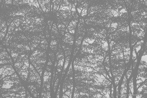 glenn vanderbeke, glenn vanderbeke fotografie, glenn vanderbeke belgisch landschapsfotograaf, landschapsfotograaf, landschapsfotografie glenn vanderbeke, landscape photographer glenn vanderbeke, fine art photographer Glenn Vanderbeke, Belgische landschapsfotograaf, landschapsfotografie west-vlaanderen, west vlaamse landschapsfotograaf, België, Molsbroek