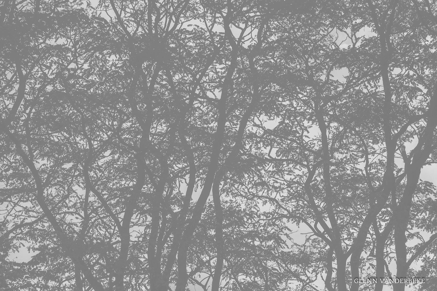 glenn vanderbeke, landschapsfotografie, landschapsfotograaf, fotografie molsbroek, foto uitstap, foto dagtrip, fotografische dagtrip, west-vlaamse fotografen, west-vlaamse fotograaf, lokeren, molsbroek, natuurreservaat, wandelen in Lokeren, natuurreservaat Lokeren, Natuur in Lokeren, locatie Molsbroek