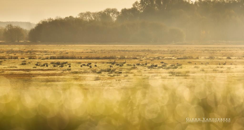 Workshop Koen de Langhe, Workshop Schulensmeer © West-Vlaamse landschapsfotograaf Glenn Vanderbeke