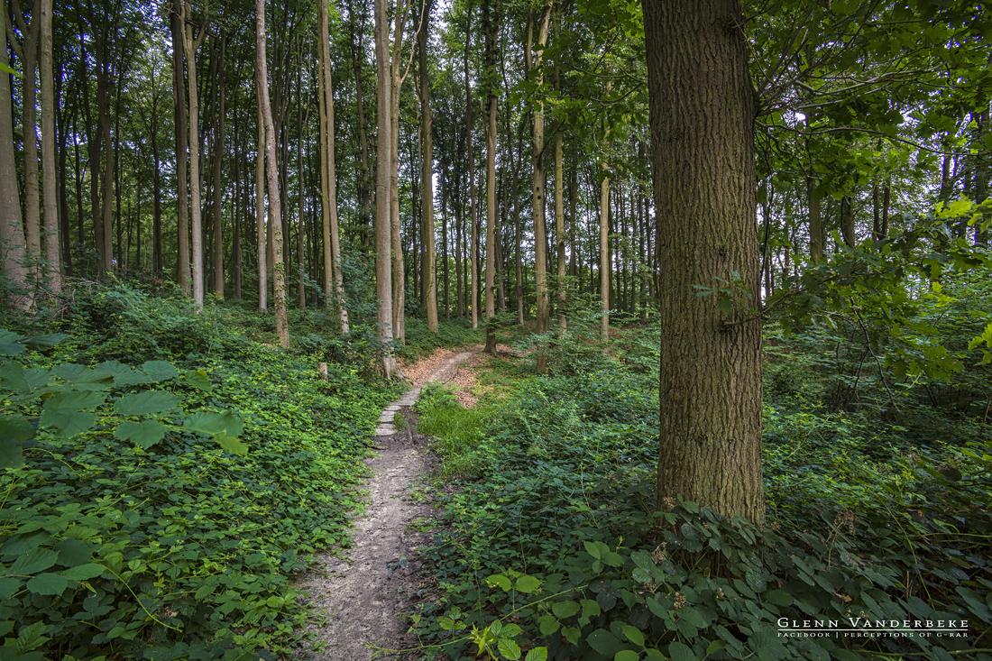 Koppenbergbos, Oudenaarde. © West-Vlaamse landschapsfotograaf Glenn Vanderbeke