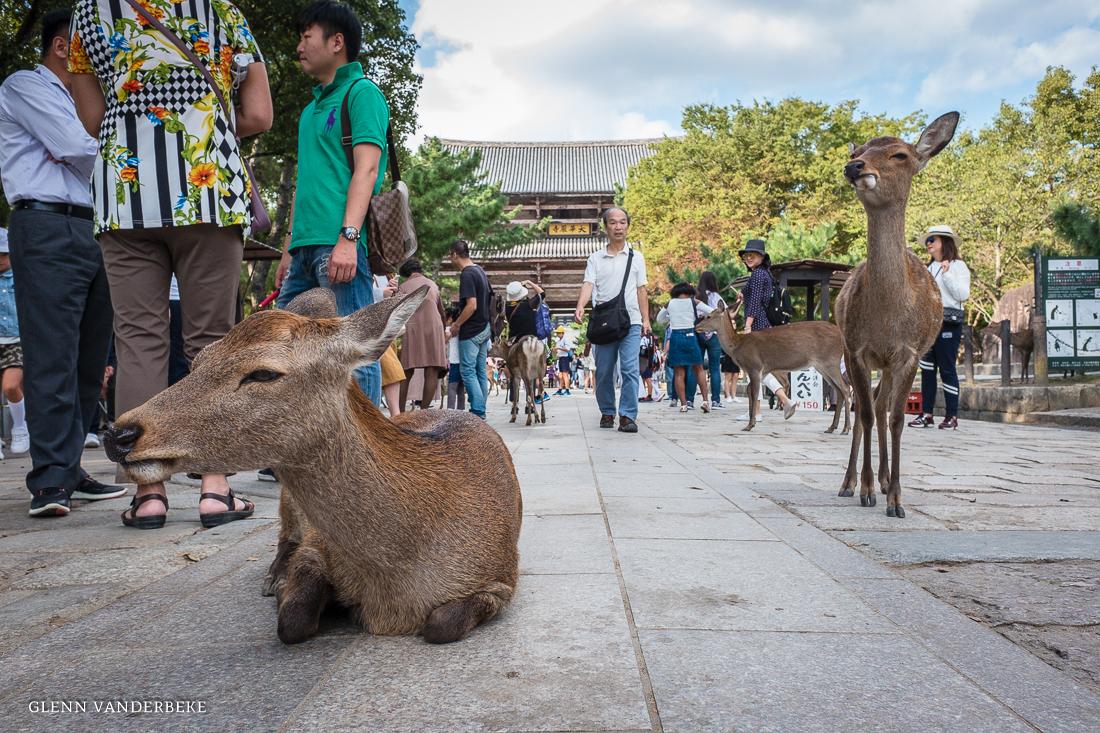glenn vanderbeke, landschapsfotograaf, reisfotograaf, reisfotografie, japan, Nara Park, Deer Park, Nara