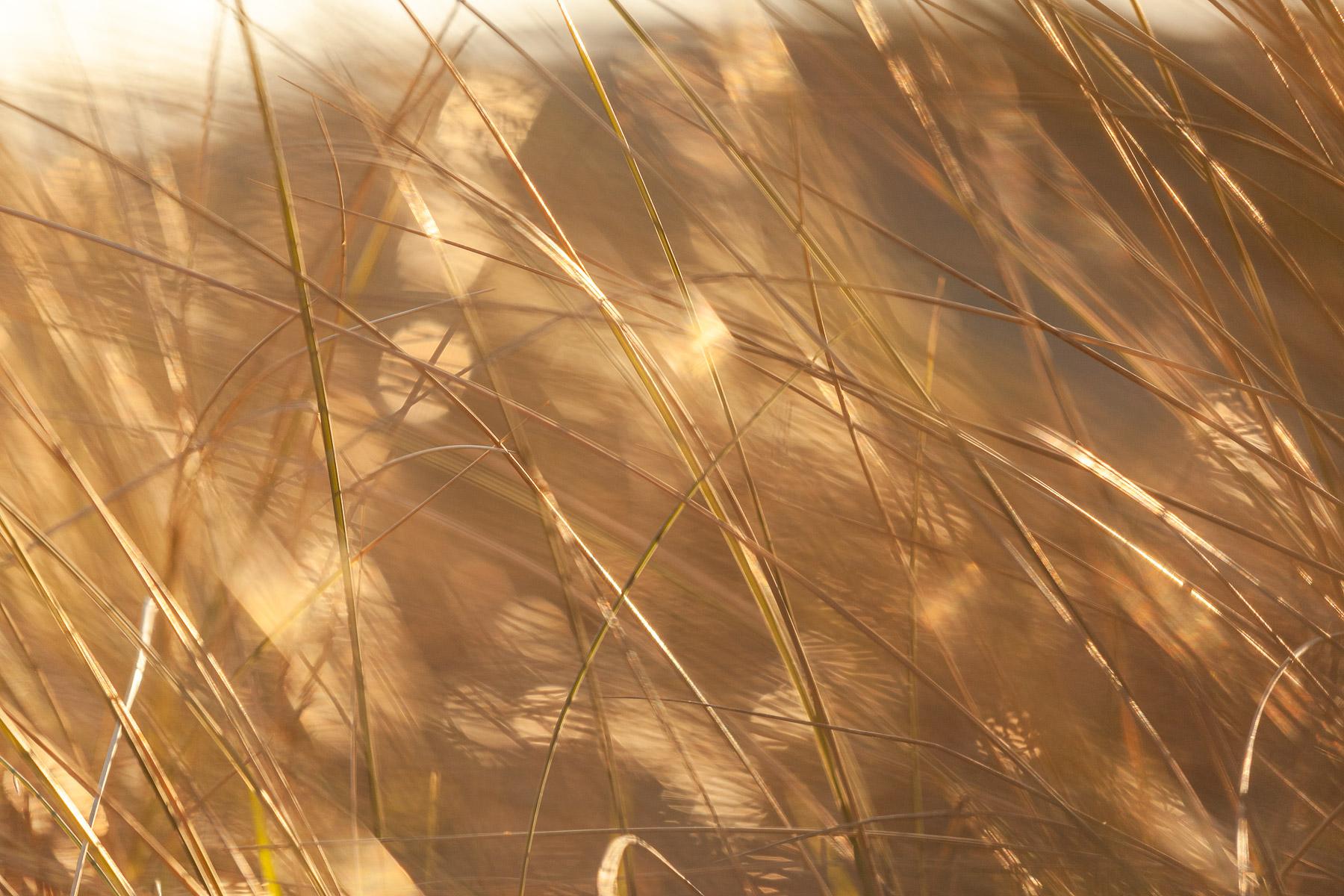 glenn vanderbeke, landschapsfotografie, landschapsfotograaf, foto uitstap, foto dagtrip, fotografische dagtrip, west-vlaamse fotografen, west-vlaamse fotograaf, Foto uitstap, Vlaanderen, West-Vlaanderen, Duinwandeling, duinbeleving, duinwandeling koksijde, foto uitstap Koksijde, wat te doen Koksijde, wat te zien Koksijde, fotografie Koksijde, duinfotografie, Foto's duinen, Fotografie duinen