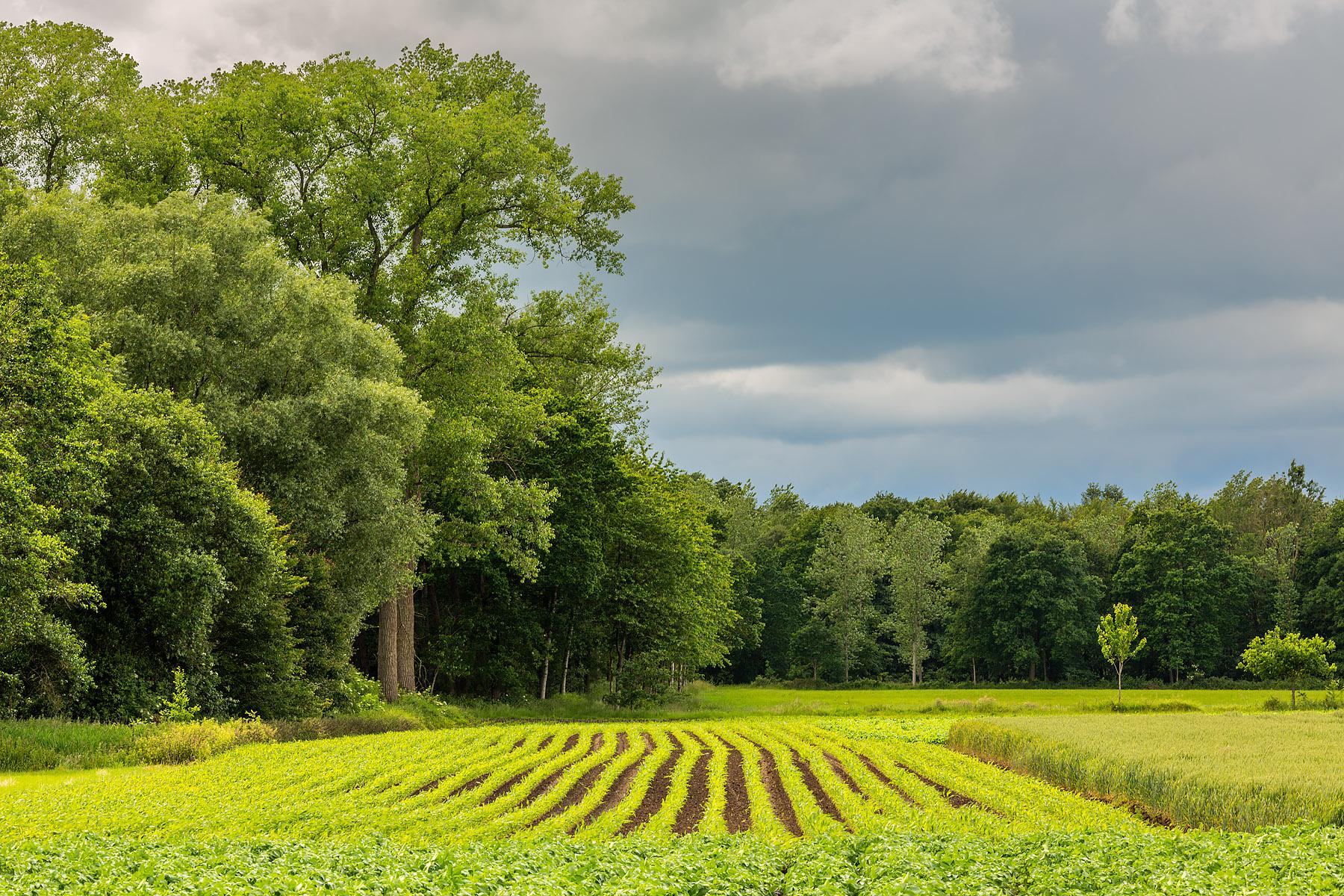 glenn vanderbeke, landschapsfotografie, landschapsfotograaf, foto uitstap, foto dagtrip, fotografische dagtrip, west-vlaamse fotografen, west-vlaamse fotograaf, Foto uitstap, Vlaanderen, West-Vlaanderen, stormchasing, onweersfotografie, stormchasing Torhout, stormchasing wijnendalebos, onweersofotografie Torhout, onweersfoto, onweersfotografie wijnendalebos, fotografie uitstap, fotogafie Torhout, Torhout, fotograaf Torhout