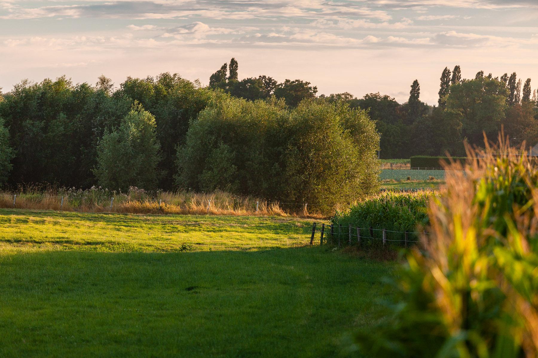glenn vanderbeke, landschapsfotografie, landschapsfotograaf, foto uitstap, foto dagtrip, fotografische dagtrip, west-vlaamse fotografen, west-vlaamse fotograaf, Foto uitstap, Vlaanderen, West-Vlaanderen, Torhout, Wijnendale, fotografie uitstap, fotogafie Torhout, fotograaf Torhout, fotograaf Wijnendale, Zonnebloem, Zonnebloemveld