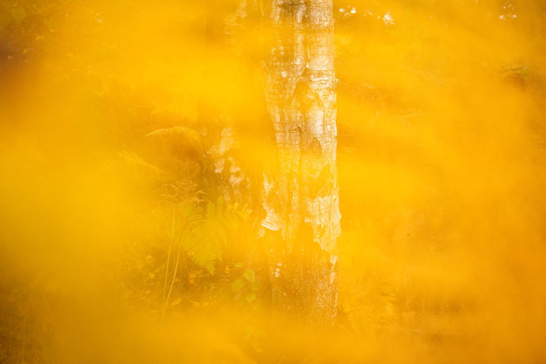 Varens, Hageven in Pelt (Neerpelt), West-Vlaamse landschapsfotograaf Glenn Vanderbekeen in Pelt (Neerpelt), West-Vlaamse landschapsfotograaf Glenn Vanderbeke