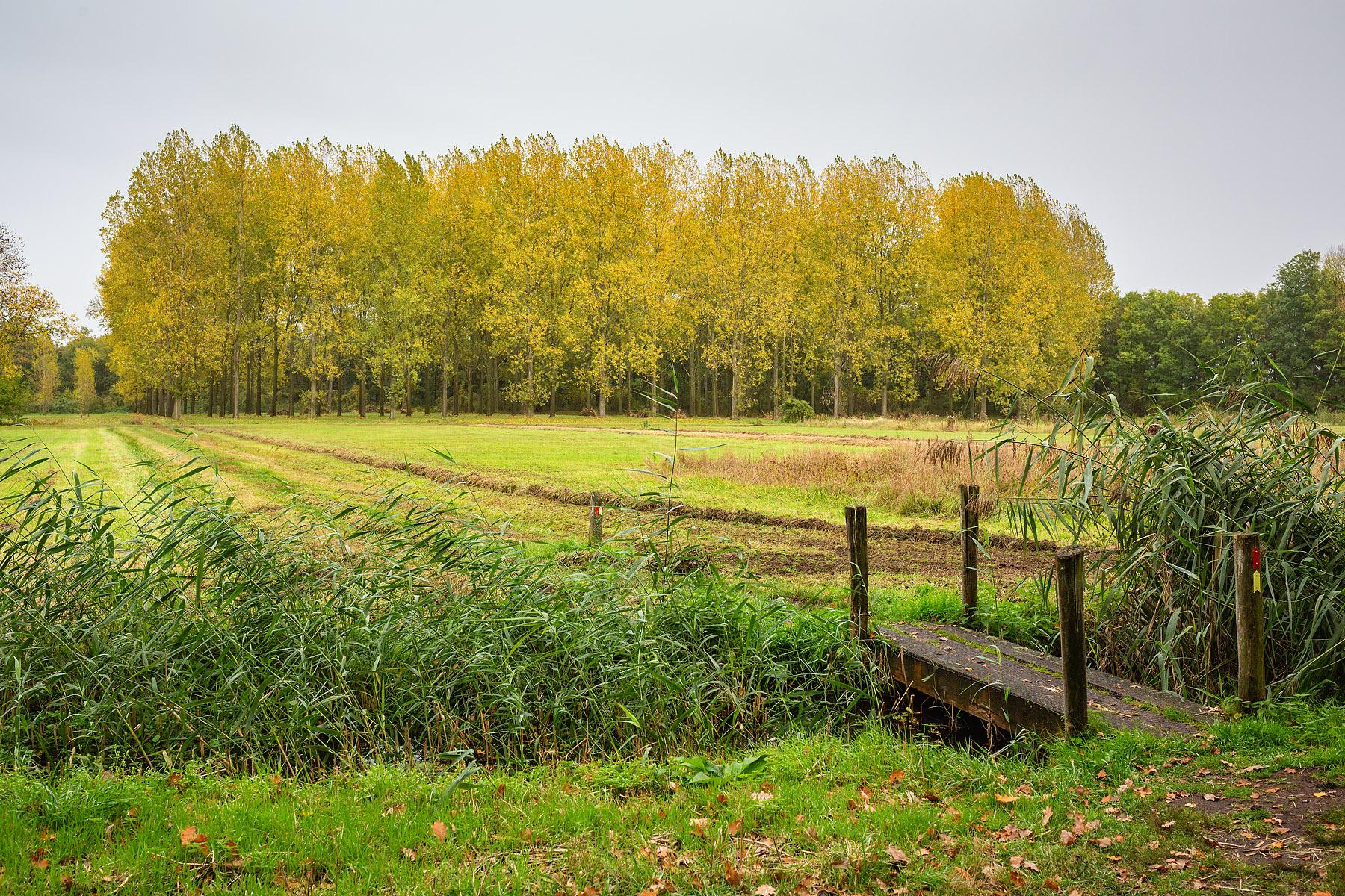 Hageven in Pelt (Neerpelt), West-Vlaamse landschapsfotograaf Glenn Vanderbeke