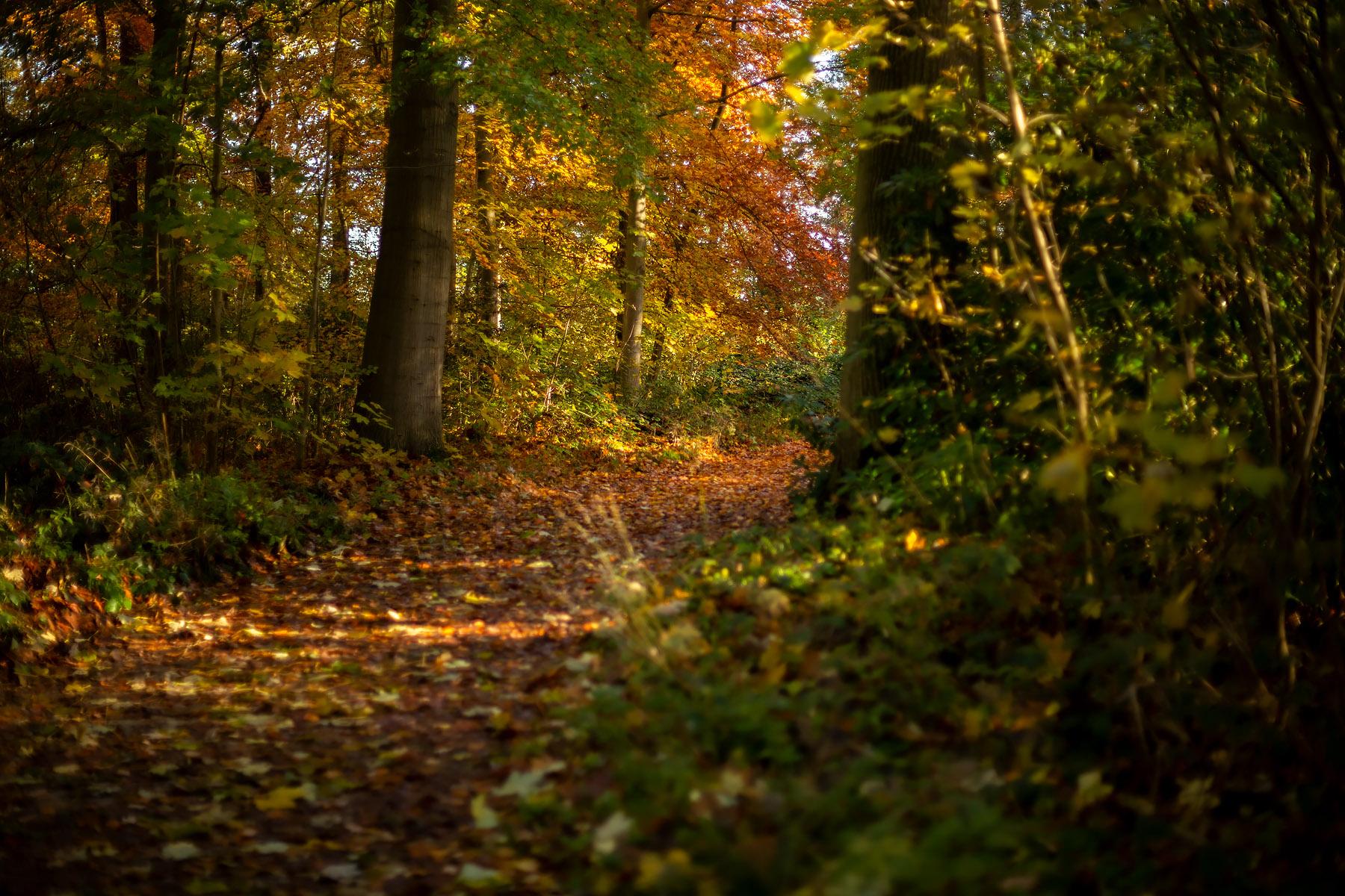 Provinciedomein d'Aertrycke te Torhout, Herfst © Glenn Vanderbeke