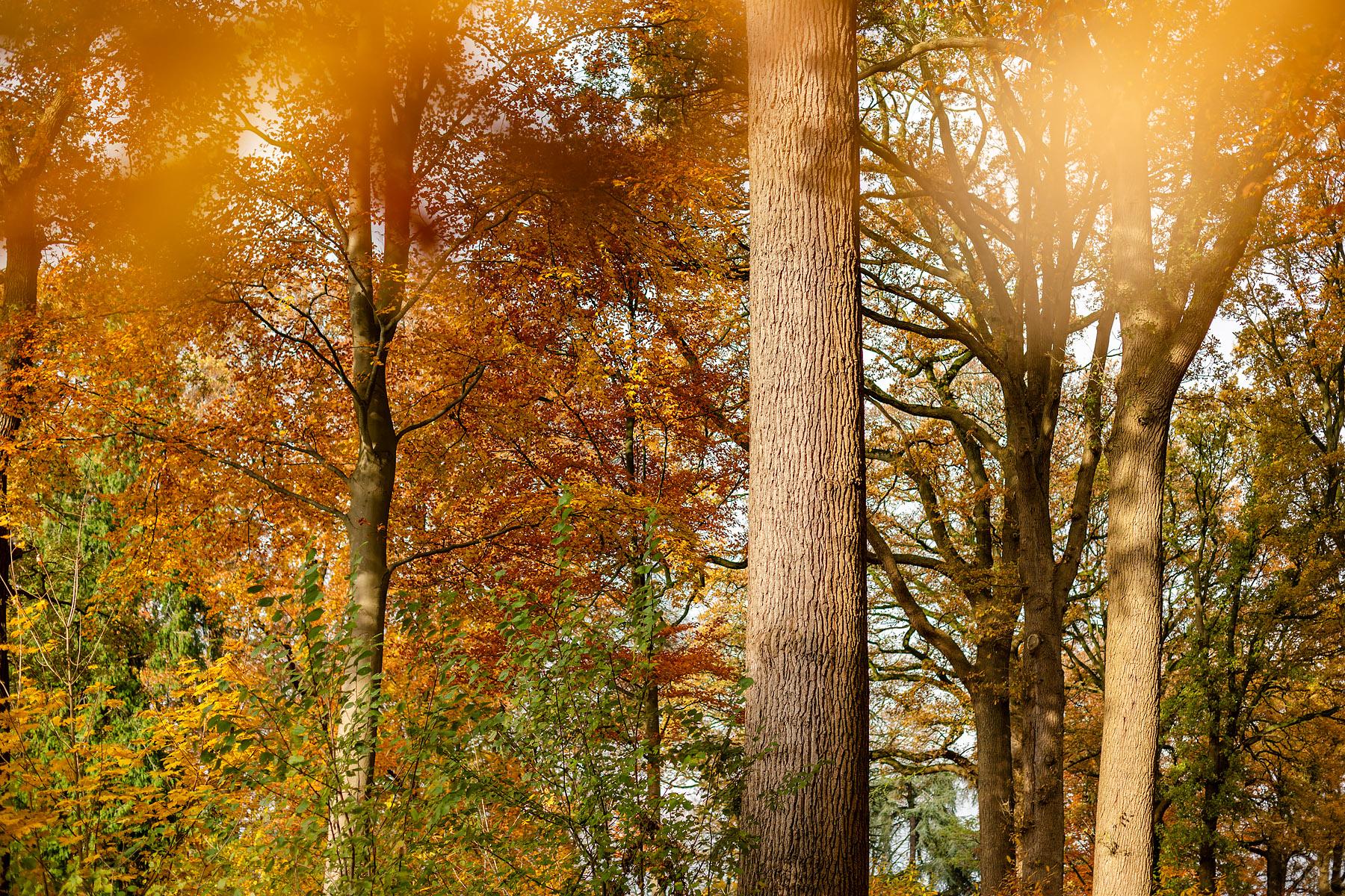 Kasteelpark van Loppem, Kasteel van Loppem © Glenn Vanderbeke