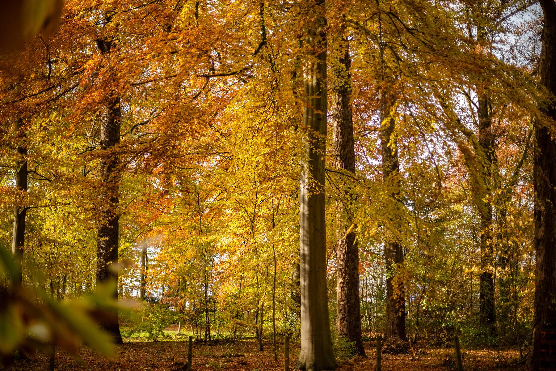 Landschapspark van Loppem, Kasteel van Loppem © Glenn Vanderbeke