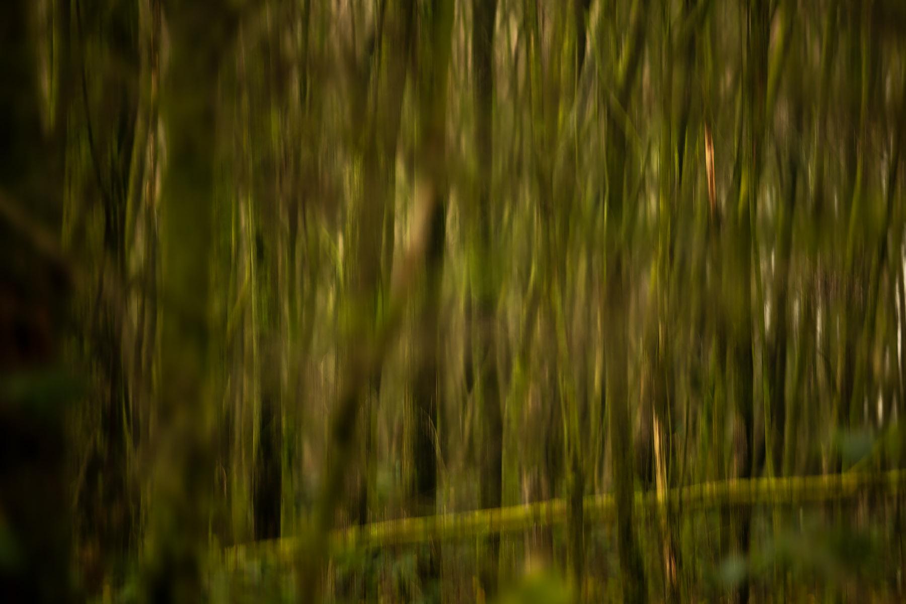 landschapsfotografie, landschapsfotografie in het provinciedomein Zeebos, Provinciedomein Zeebos - Blankenberge, West-Vlaams landschapsfotograaf Glenn Vanderbeke, wandelen in het provinciedomein Zeebos, wandelen in Blankenberge, Wandeling Blankenberge