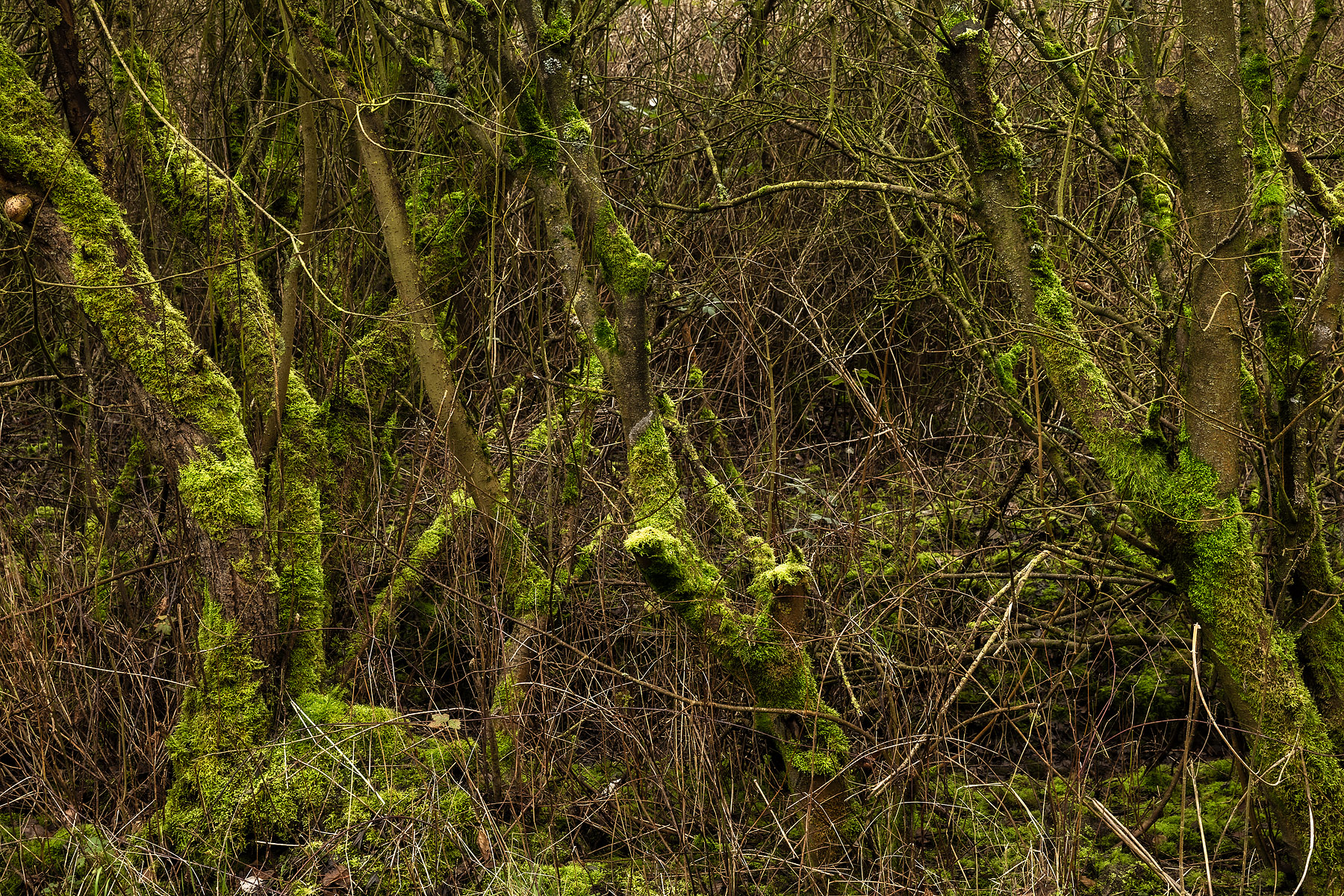 landschapsfotografie, landschapsfotografie in het provinciedomein Zeebos, Kijkhut in het Provinciedomein Zeebos - Blankenberge, West-Vlaams landschapsfotograaf Glenn Vanderbeke, birdwatching in Blankenberge, vogelspotten in Blankenberge