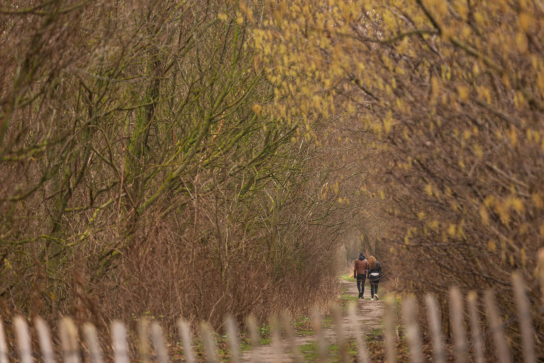 glenn vanderbeke, landschapsfotografie, landschapsfotograaf, foto uitstap, foto dagtrip, fotografische dagtrip, fotografie uitstap, foto-uitstap, west-vlaamse fotografen, west-vlaamse fotograaf, Vlaanderen, wat te doen in Knokke-Heist, wat te doen in Heist, Natuurfotografie in Heist, landschapsfotografie in Heist, landschapsfotografie in Knokke-Heist, De Sashul, groene gordel van Knokke-Heist, De groene gordel van Heist-West, landschapsfotografie Zeebrugge