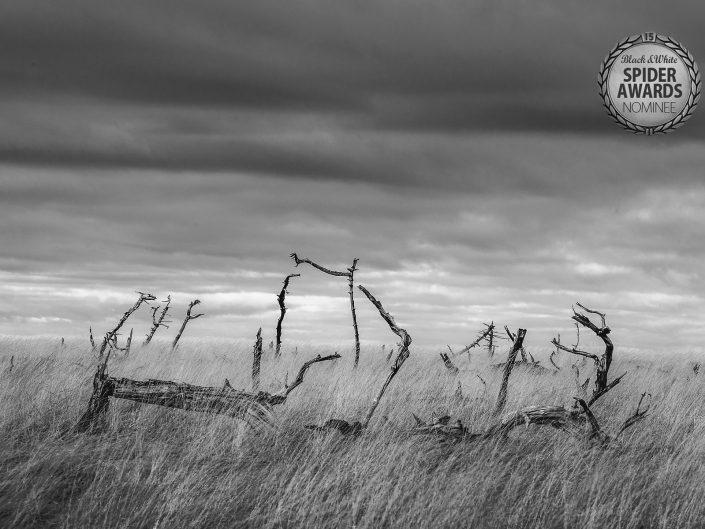 Glenn Vanderbeke, landschapsfotograaf, landscape photographer belgium, belgian landscape photographer, belgian fine art photographer, West-Vlaamse landschapsfotograaf, Monocrhome Photography Awards, MonoAwards, fine art photography, b&w spider awards, b&w spider awards nominee, noir flohay, hoge venen